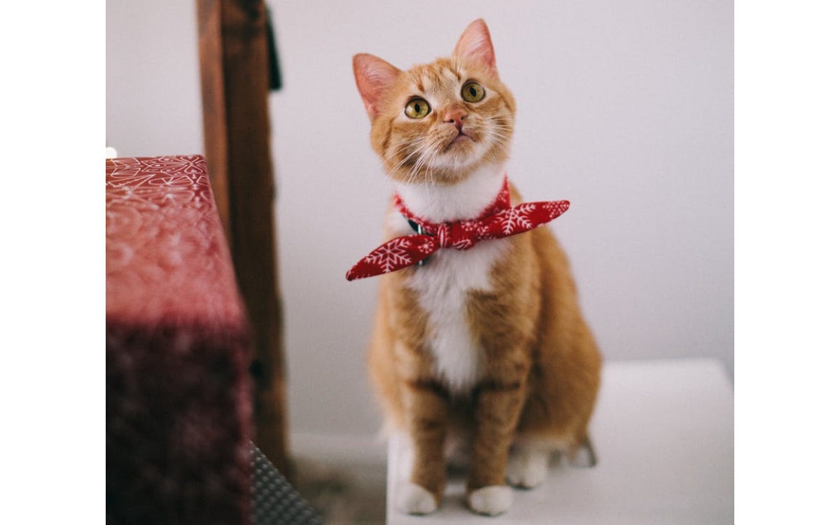 How to Keep Your Cat Clean and Healthy?