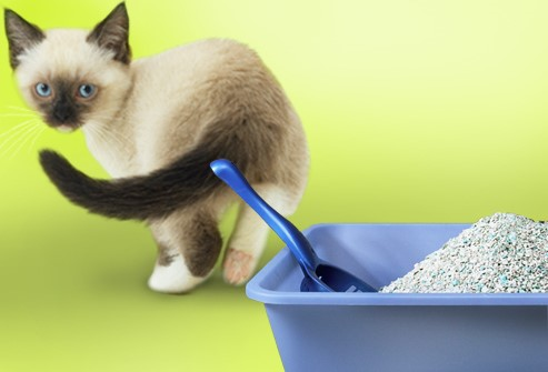 5 Essential Ways to Solve Your Cat Litter Box Problems